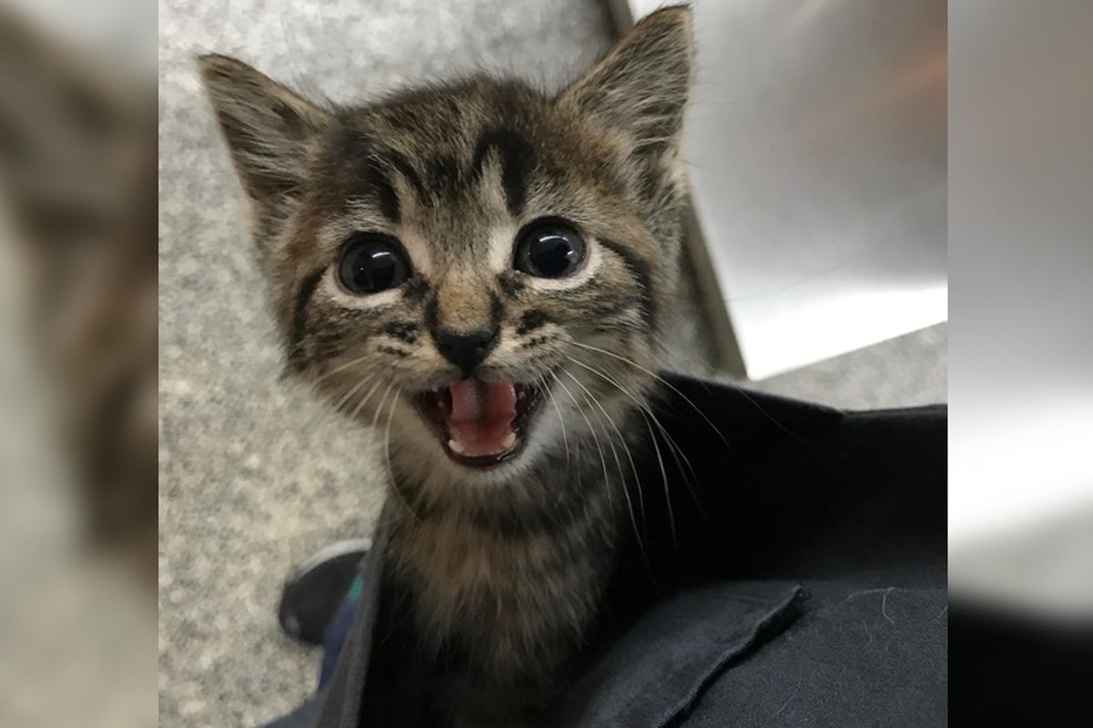 Stray Kitten Wouldn't Stop Crying for Love at Clinic So They Come Up With an Idea