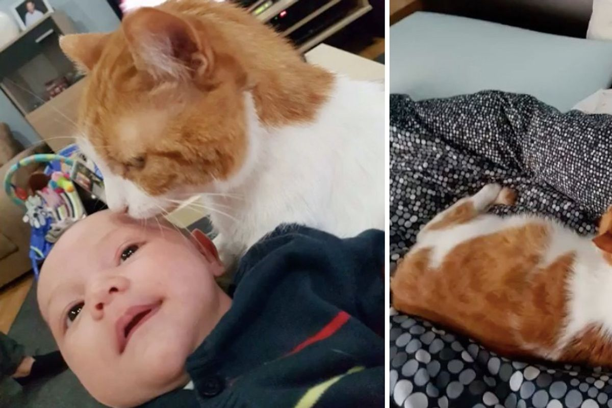 Shy Cat Saved from the Street Becomes Guardian to Boy and His Little Sister