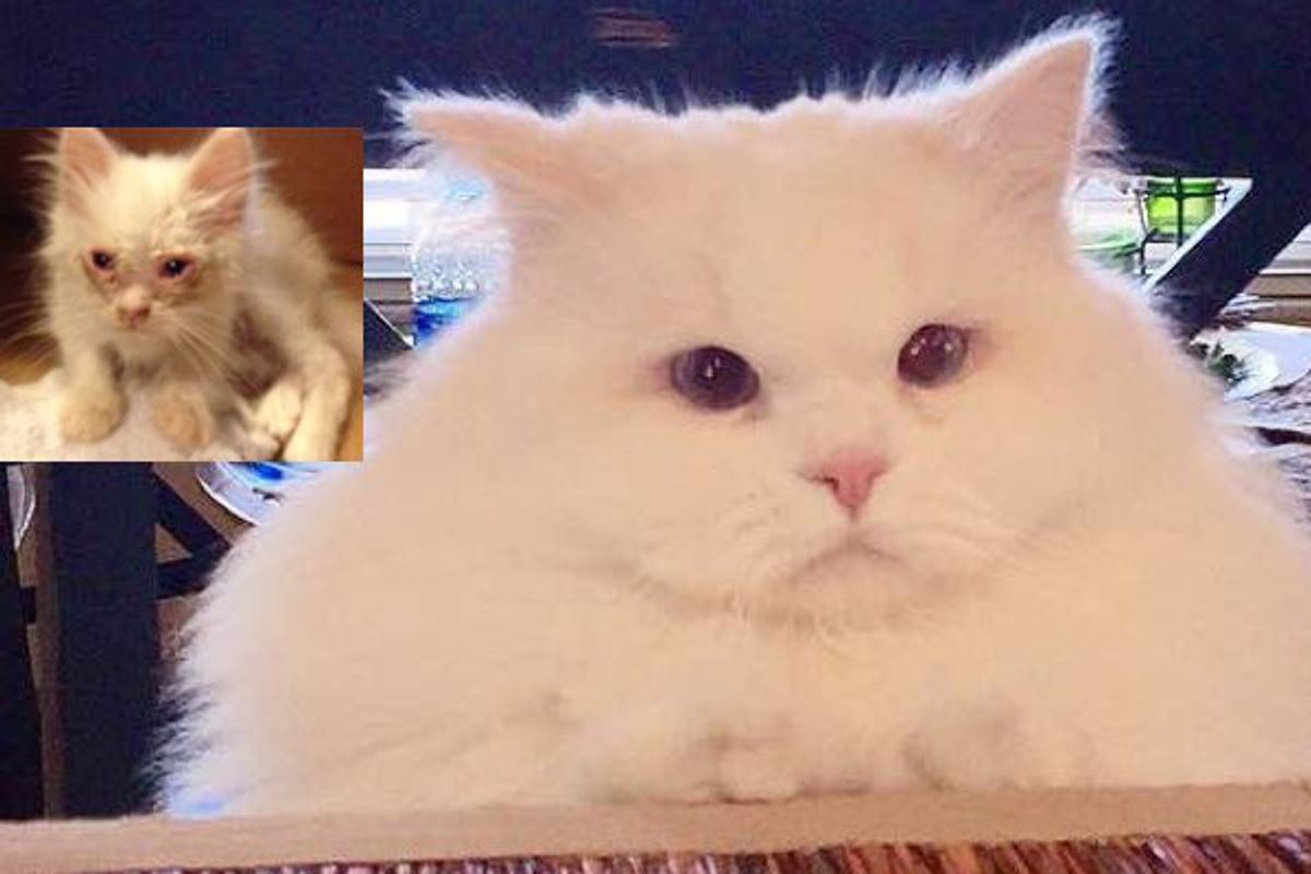 Cat Found on Roadside Surprises His Humans with His True Fluff
