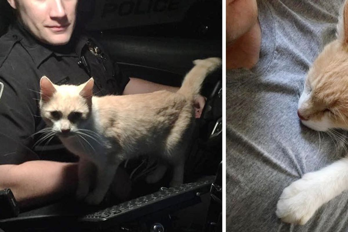 Cat Jumps into Officer's Cruiser And Asks Him To Be His Friend