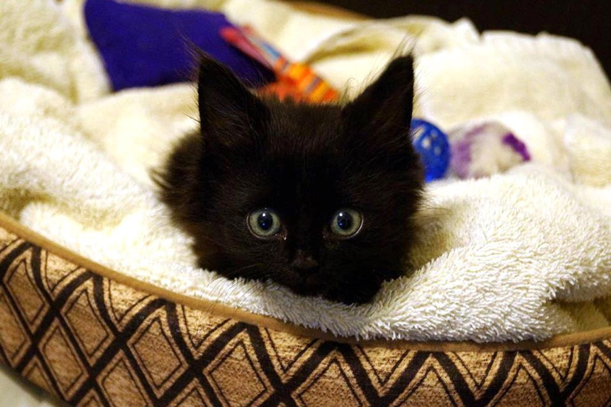 Kitten Found Quadriplegic Surprises Everyone When He Learns to Walk Again, Now 5 Years Later…