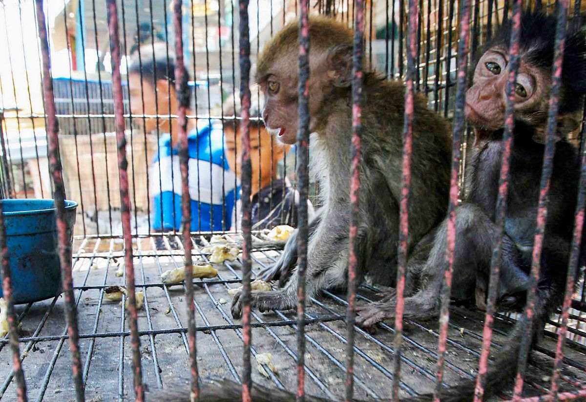 The Illegal Pet Trade and its Effects on Wildlife