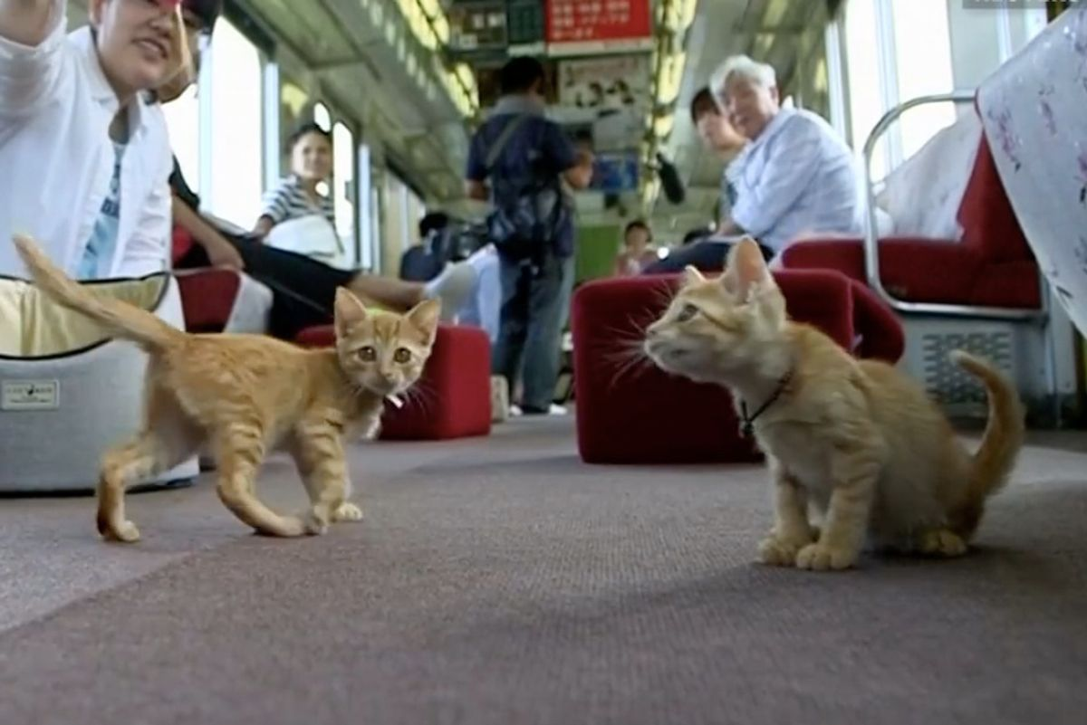Railway Operator Invited 30 Stray Cats Onboard to Help Them Find Homes