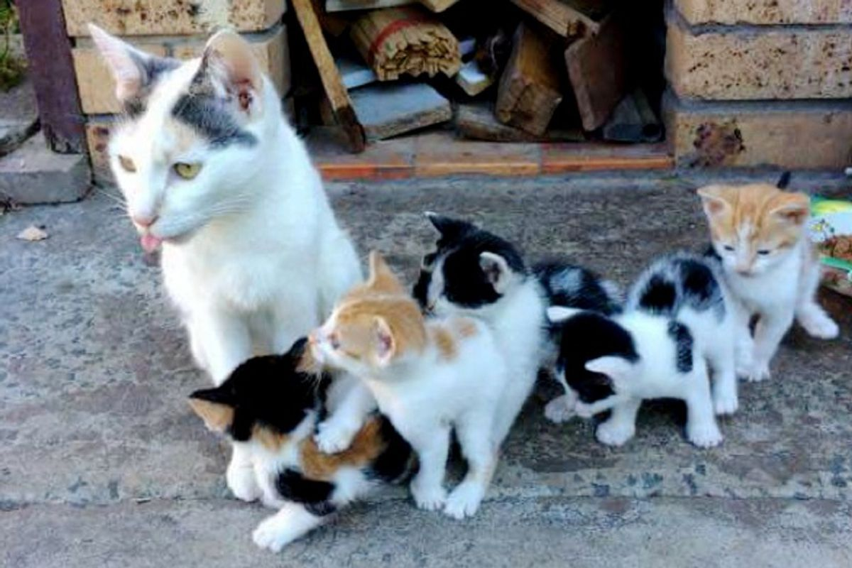 Stray Cat Mama Keeps Her Babies Safe and Fed Even When She Has Nothing to Eat