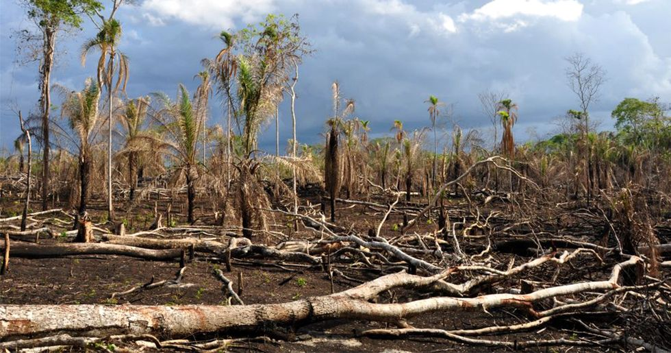 Degraded Tropical Forests Now Release More Carbon Than They Store, New Study Finds