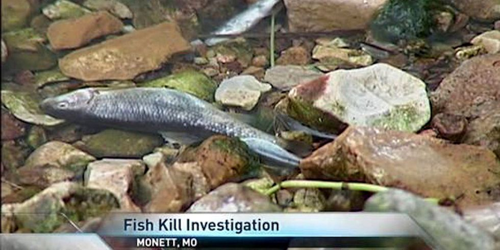 Tyson Poultry Pleads Guilty to Clean Water Act Violations, Fish Deaths in Missouri