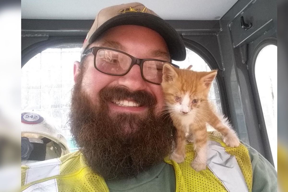 Stray Kitten Found on Pipeline, Snuggles With His Rescuer And Asks Him To Be His Human