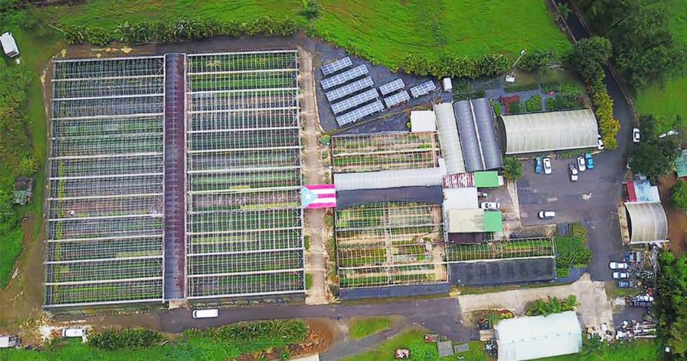 Puerto Rican Farm Powers On After Hurricane Thanks to Solar Energy