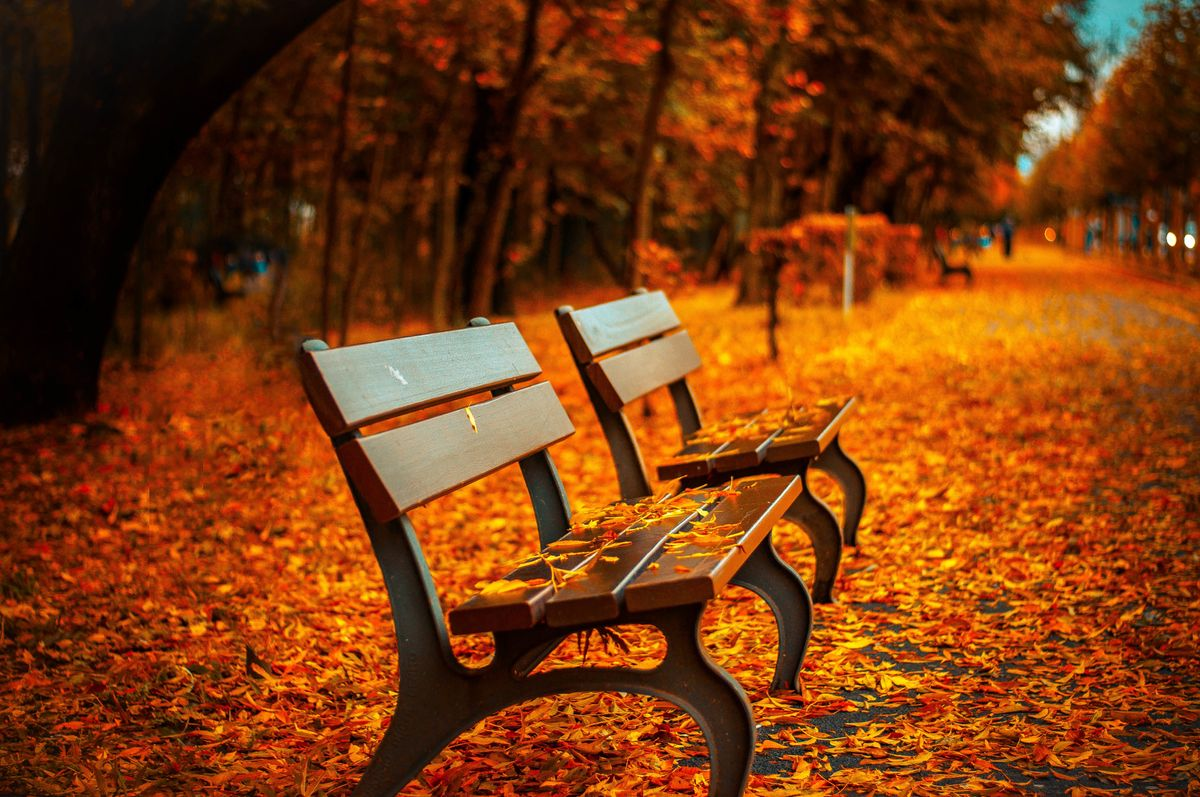 11 Things To Do In The Fall