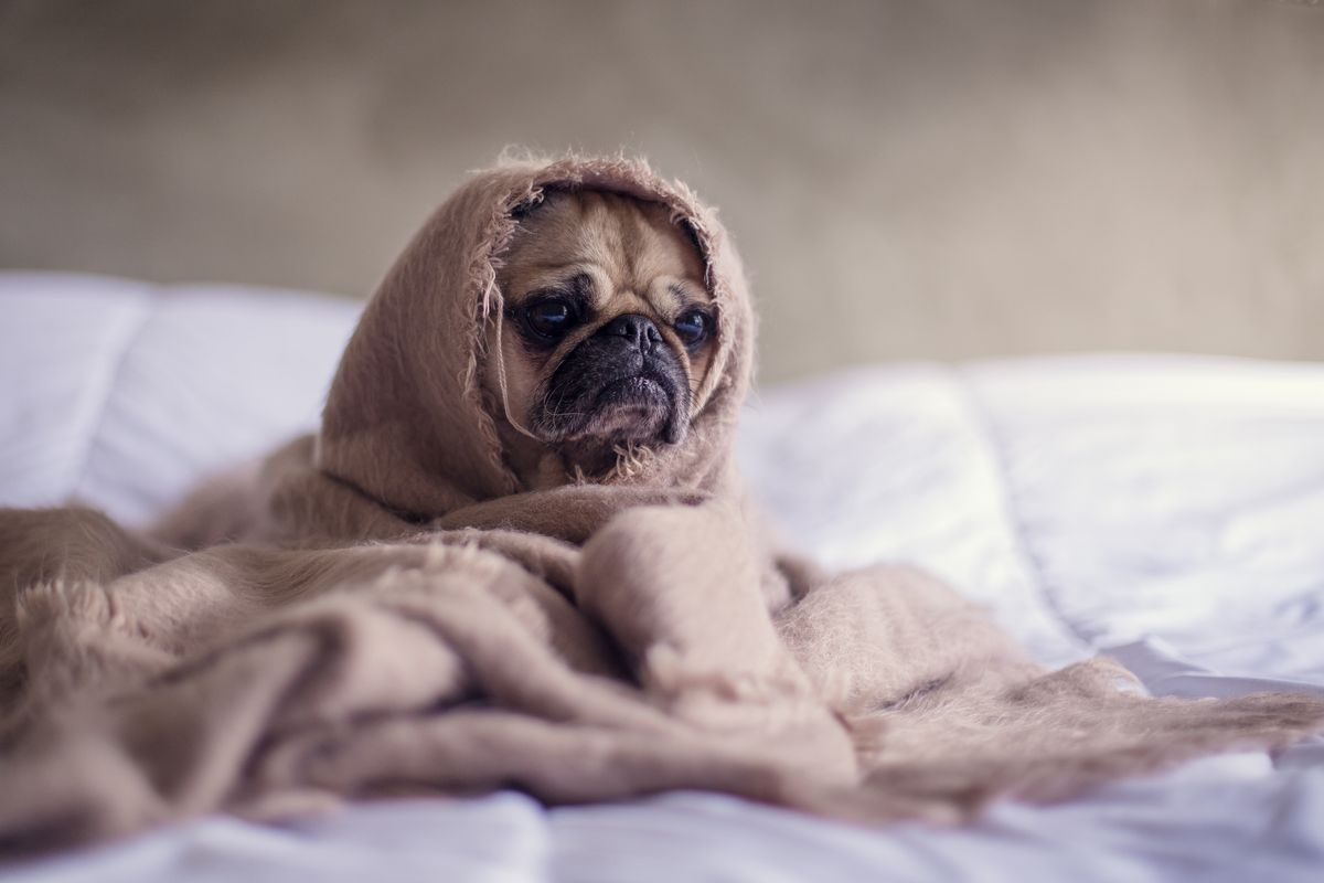 10 Pug Instagram Accounts You Need To Follow Right Now