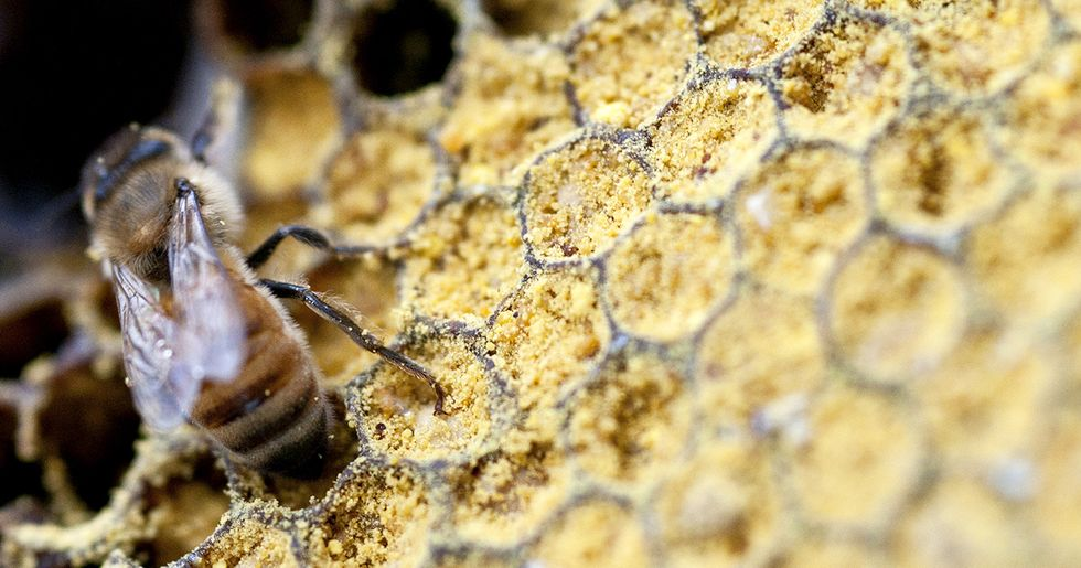 75% of World's Honey Laced With Pesticides
