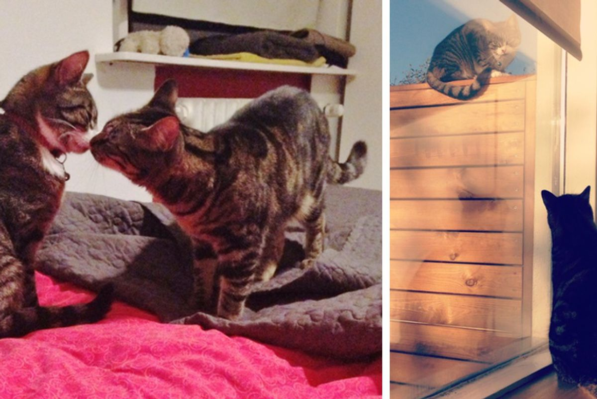 Neighbor Cat Visits His Best Friend For 3 Years and Has Never Missed a Rendezvous