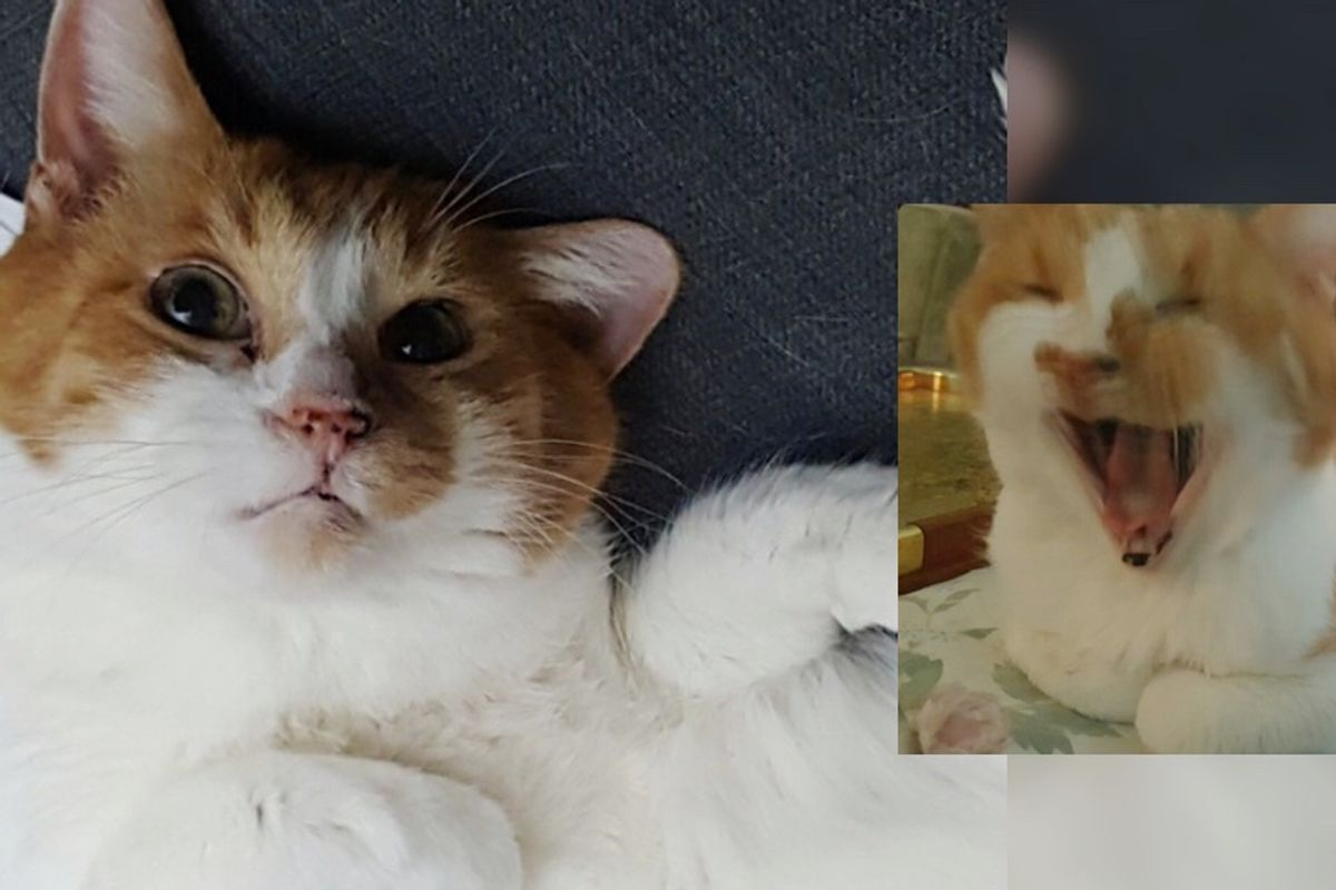 Senior Cat Can't Contain His Joy When He Finds Home After 10 Years in Shelter