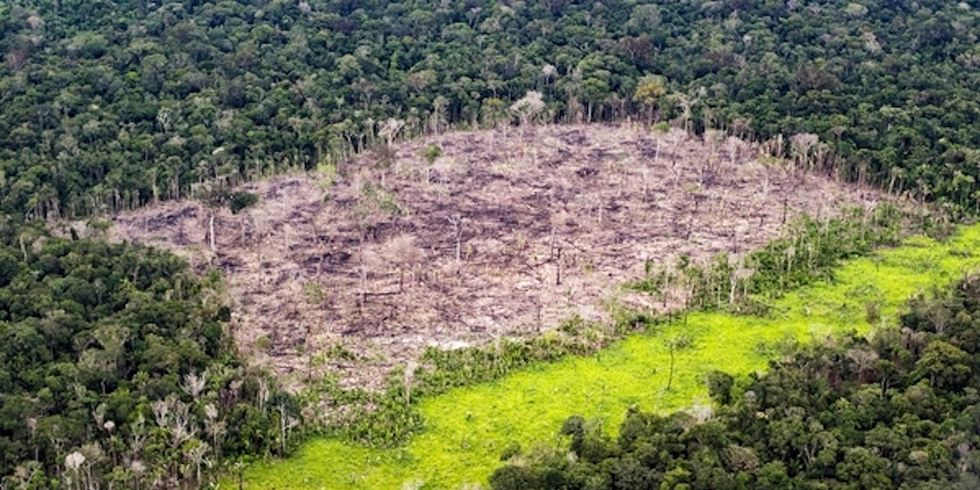WWF: 60% of Global Biodiversity Loss Due to Land Cleared for Meat-Based Diets