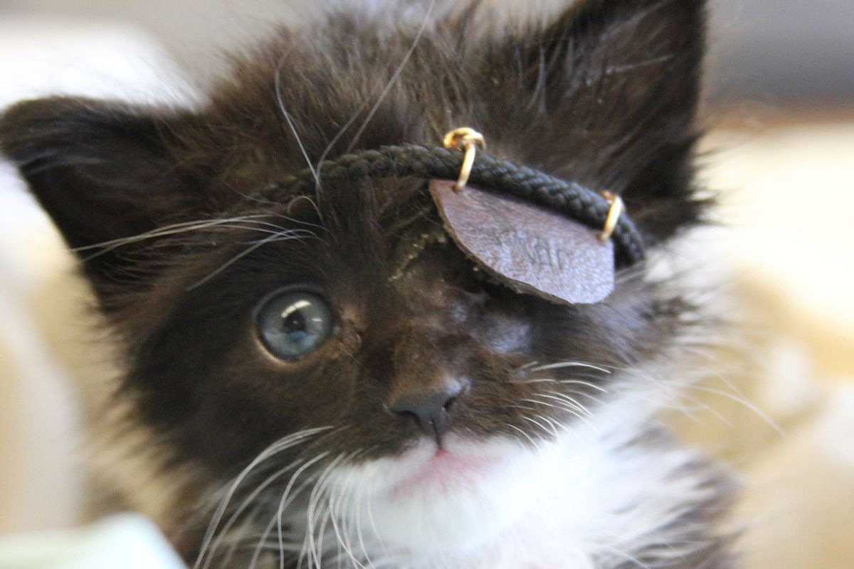 Miracle Kitten Gets Eye Patch to Help Him Heal, Now a Month After Rescue...