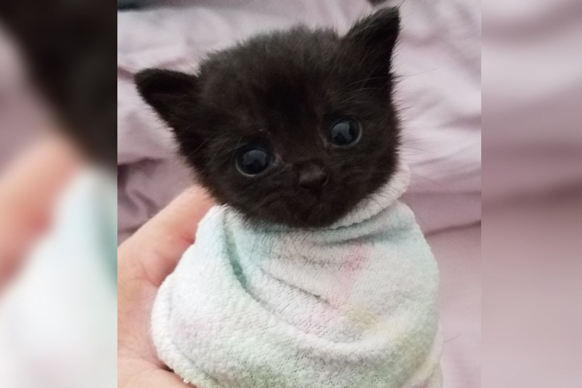 Kitten Found in Trailer Park Won't Stop Crying Until Woman Comes To Her Rescue (with pics)