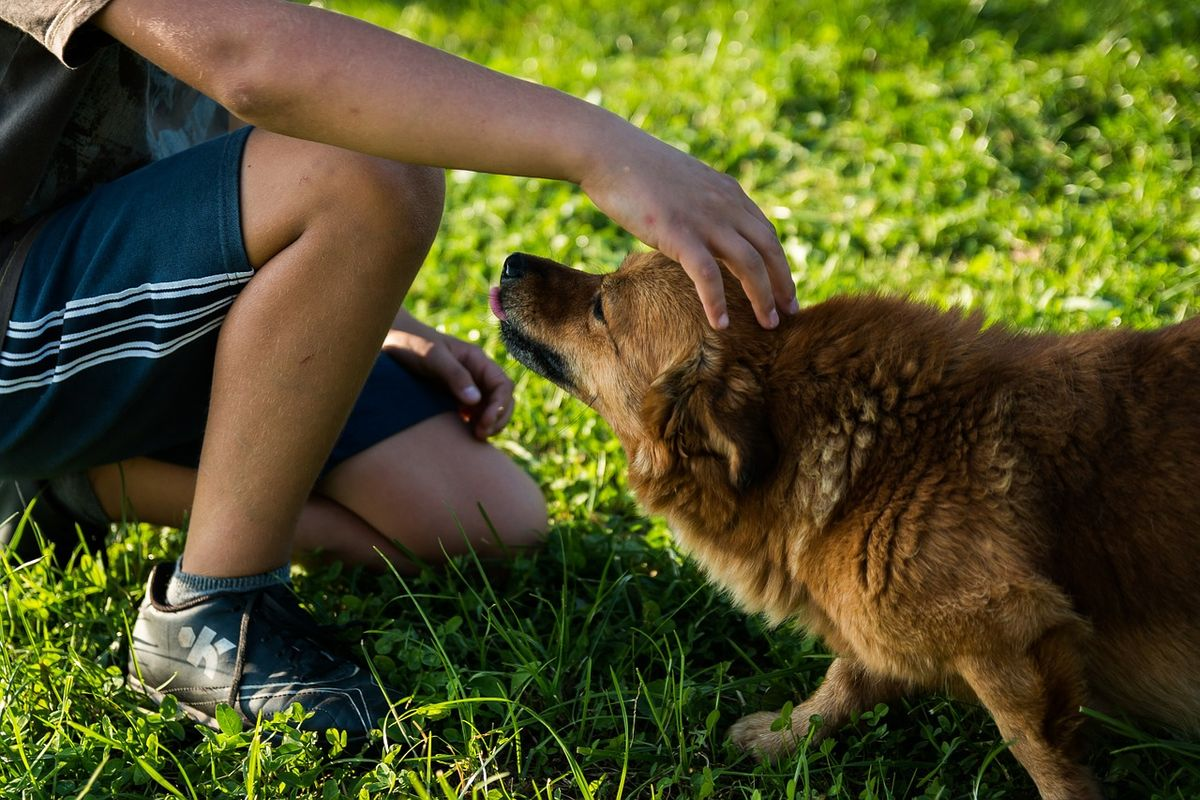 All You Need To Know About Pet Therapy