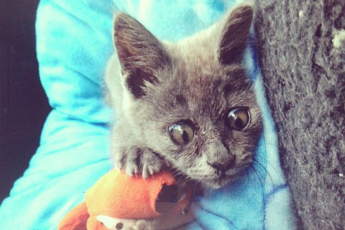 They Said This Kitten Born with 'Water on the Brain' Wouldn't Live Past 5 Months, Now 5 Years Later…