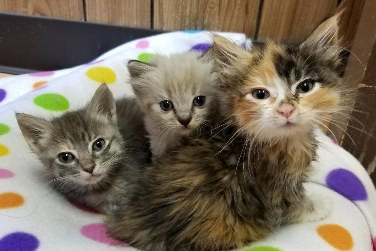 Two Sister Kittens Become Family to Tinier Orphaned Kitten So She Won't Be Alone