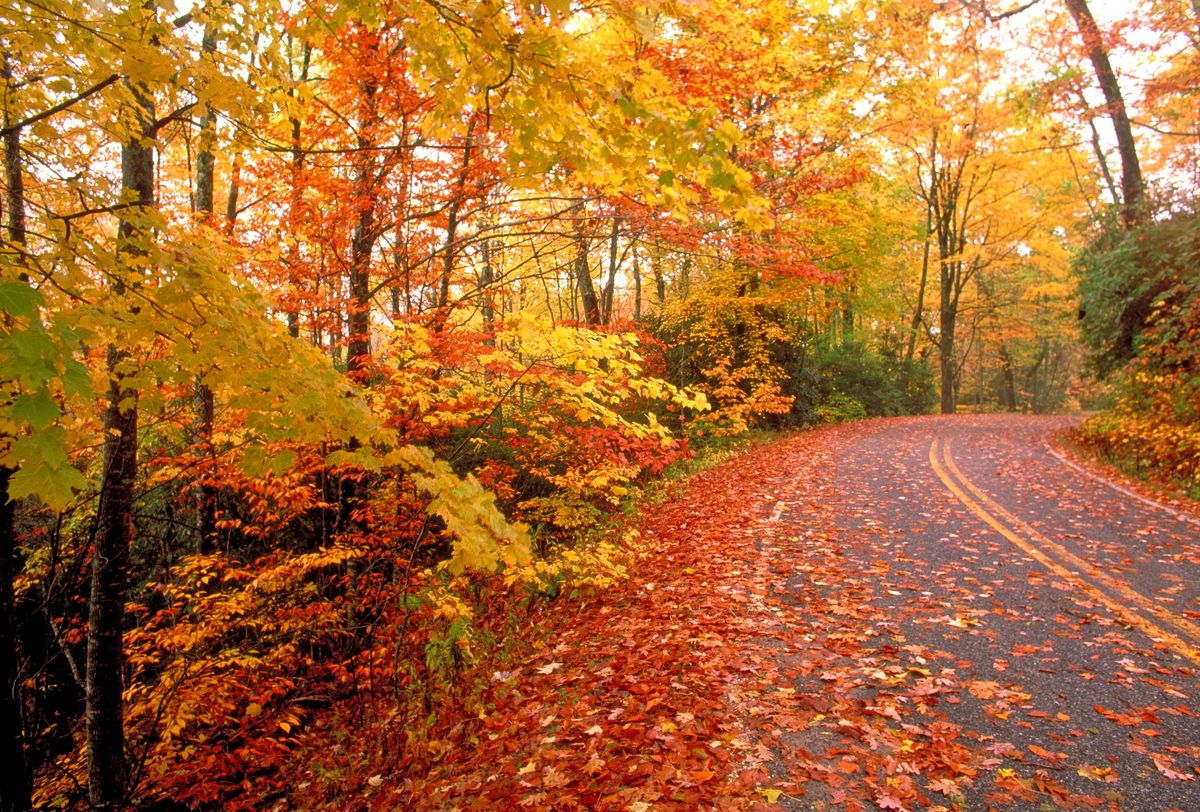 6 Easy Ways To Enjoy Autumn, Even In Florida