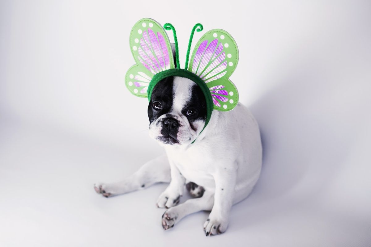 "15 Dog Halloween Costumes Guaranteed To Make You Go ""Awww"""