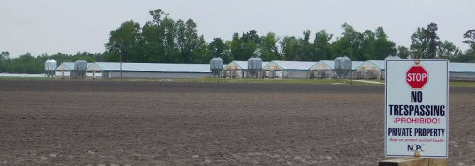 Hog poop bacteria from big NC farms taints nearby homes.