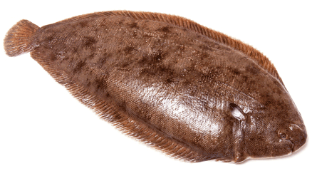dover sole jumps down man's throat