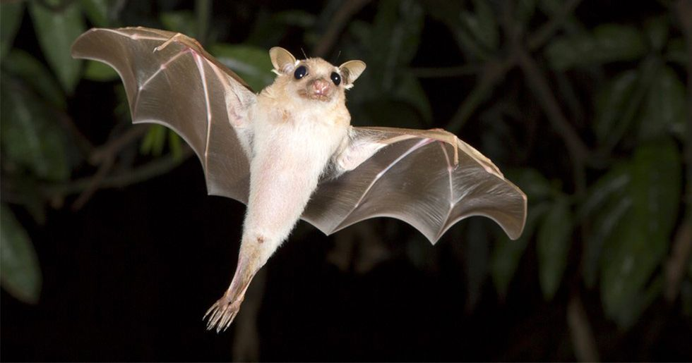 Why Are America's Bats Disappearing?