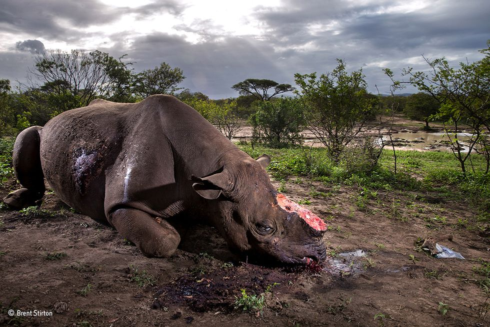 Shocking Photo of Dehorned Black Rhino Wins Top Award