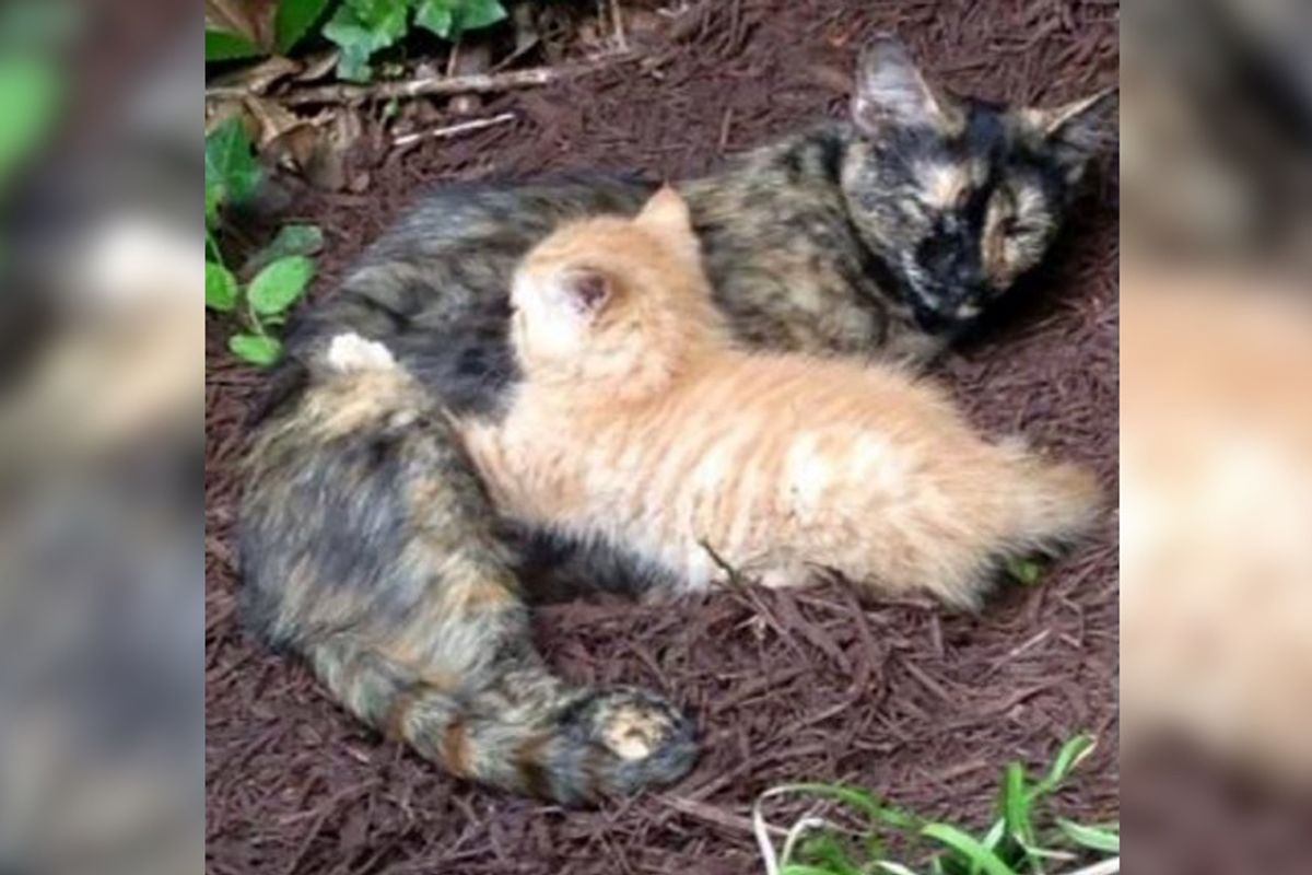 Feral Cat Chose Family's Backyard To Raise Her Only Kitten, Now 4 Years Later...