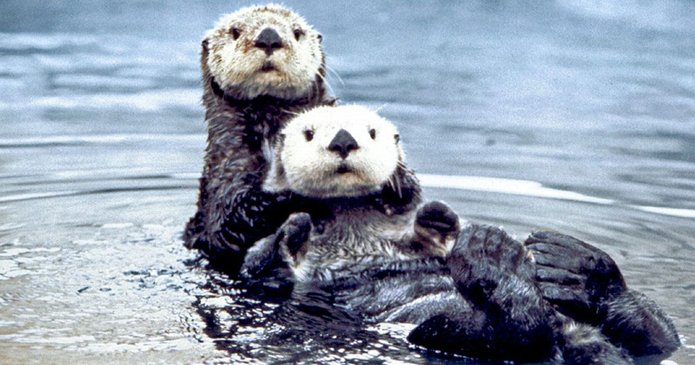Oil Spills Pose Dire Threats to Marine Life