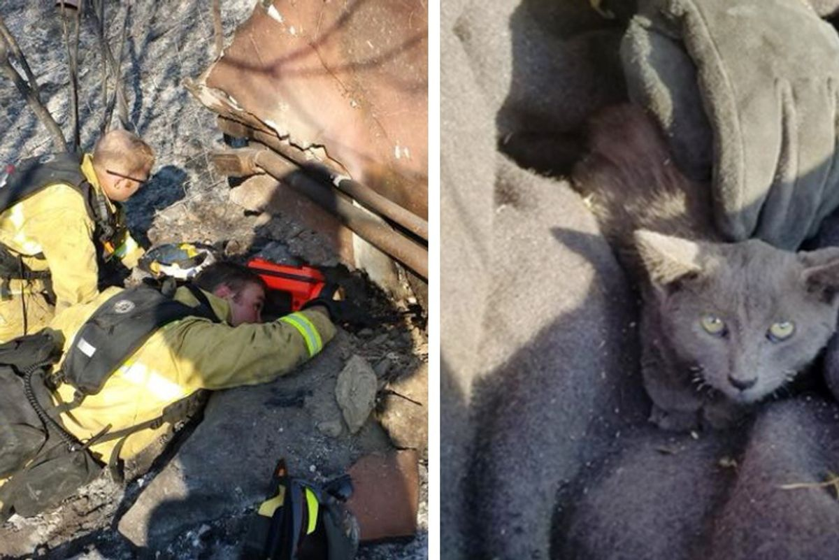 Kitten Survived Massive Wildfire is Spotted on Burnt Hillside — Fire Crew Rushes to the Rescue...
