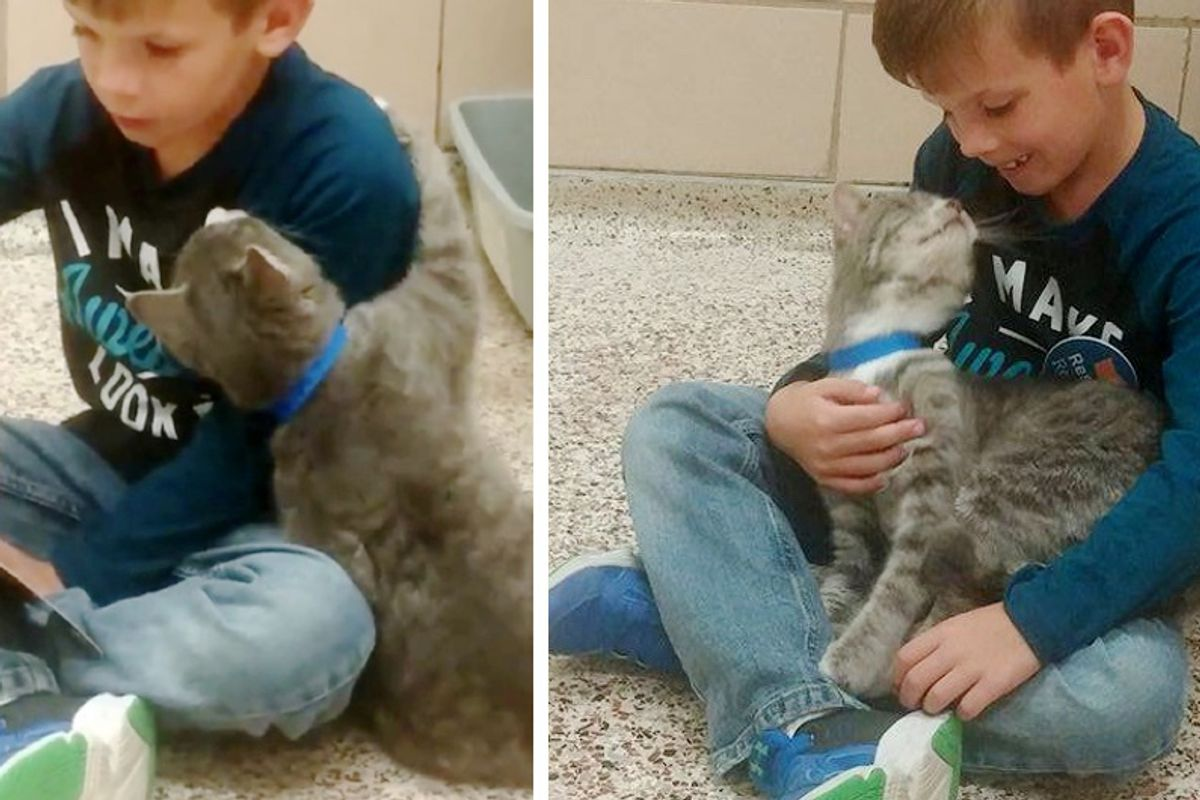 Young Boy Reads to Shelter Cats and Gets a Captive Audience in This Sweet Feline Friend...