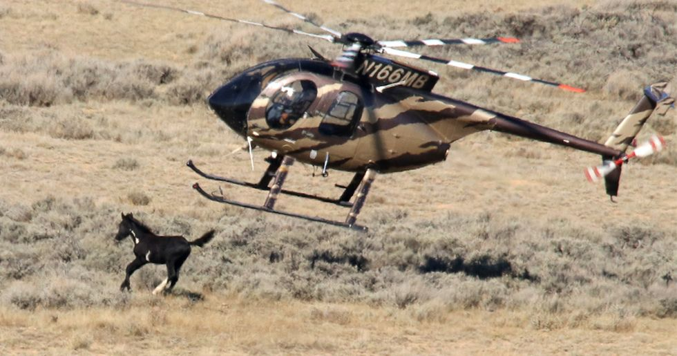 Brutal Outlook for Healthy Wild Horses and Burros: BLM Calls for Shooting 90,000