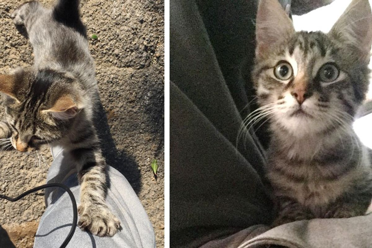 Guy Captures Moments of Him Being Chosen by Tabby Cat Found In the Street...