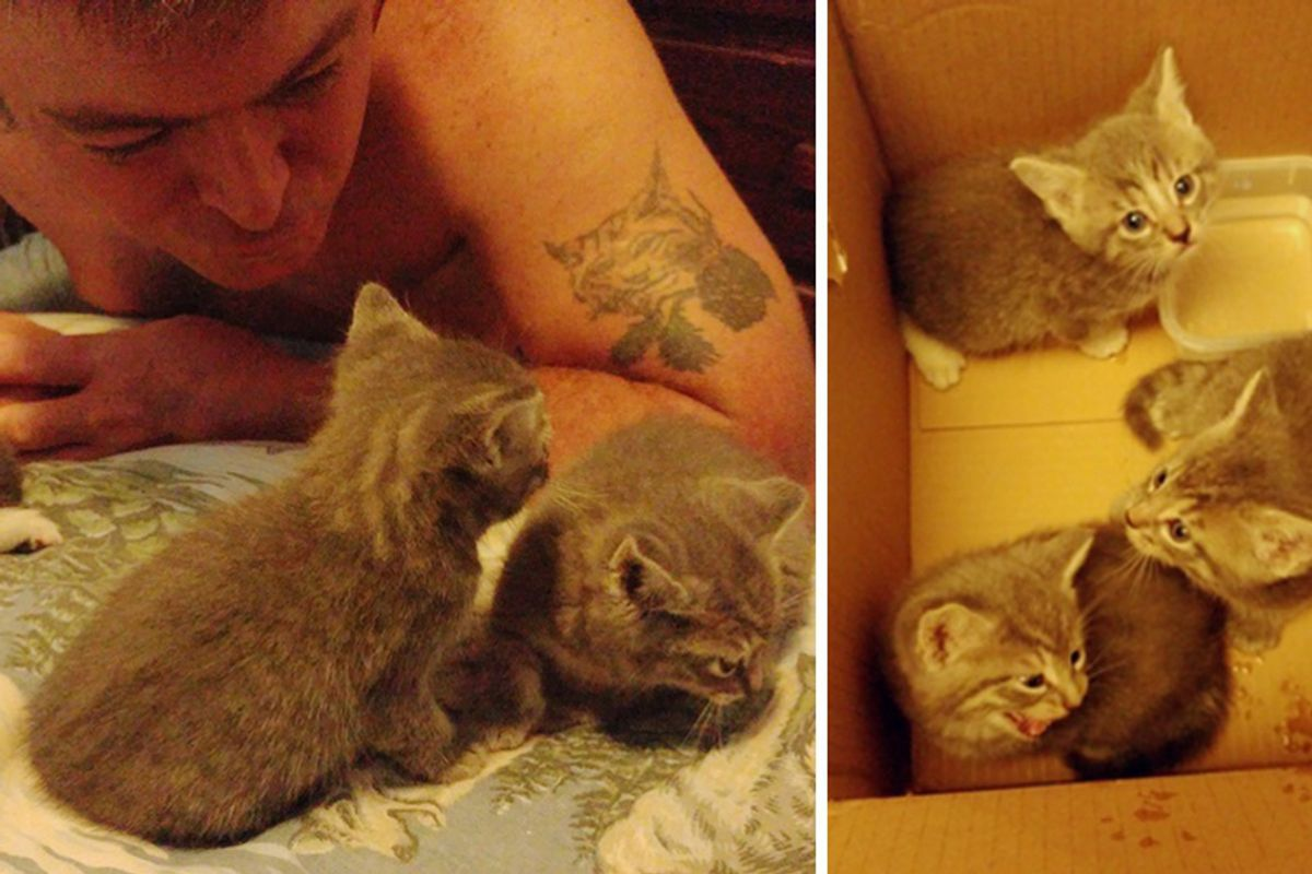 Cat Brought Her Kittens to Disabled Veteran and Asked Him to Look After Them...