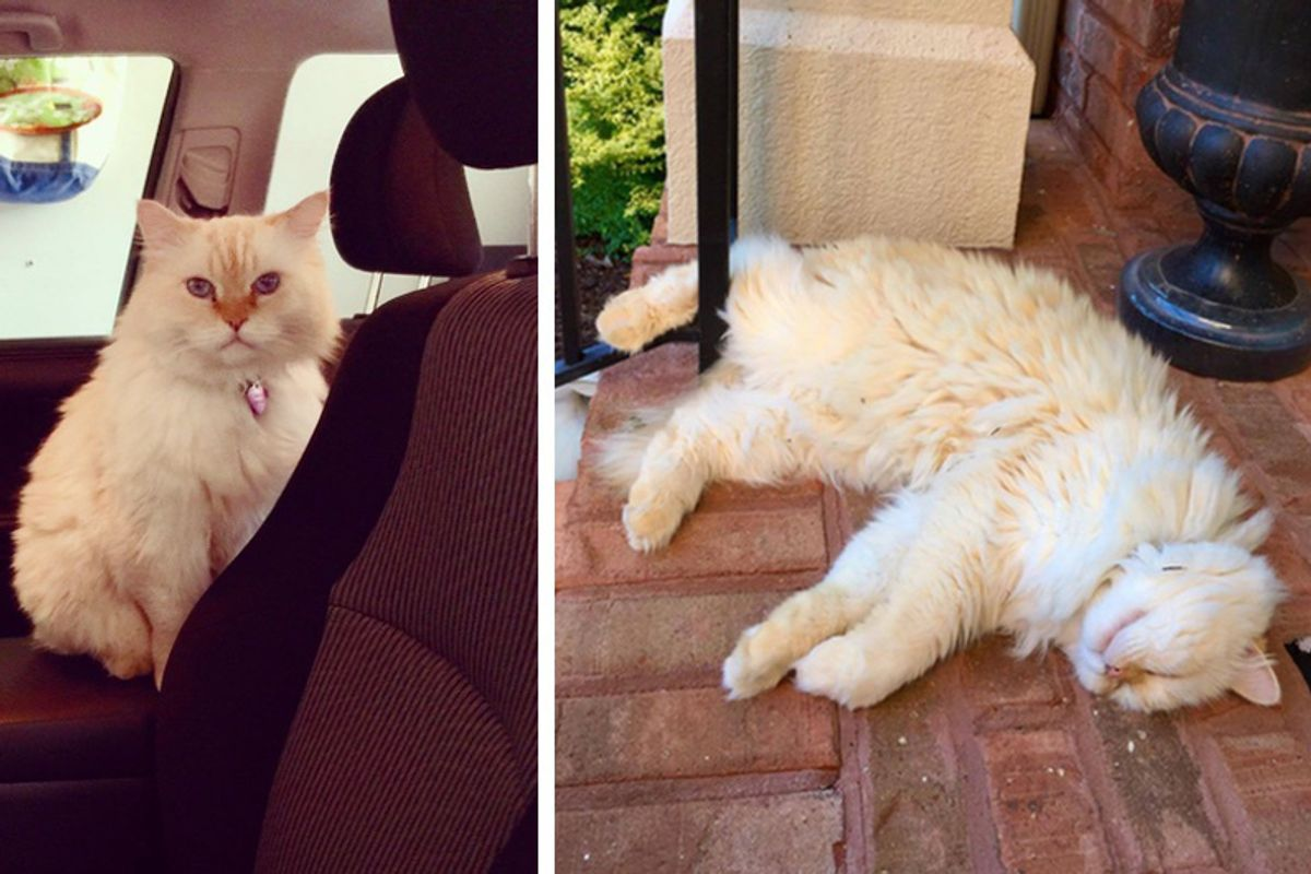 Neighbor's Cat Starts Visiting Family Nearly Every Day After They Lost Their Beloved Cat..