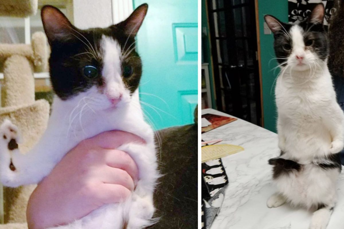 """Woman Saves """"Special abled"""" Cat that No One Wanted and Turns Her Life Around..."""