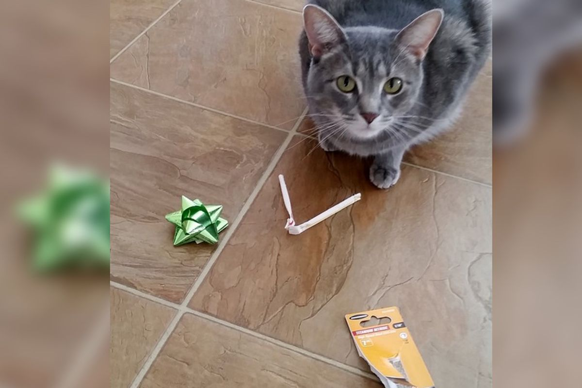 Kitty Leaves Gifts For His Humans Every Morning in the Same Place