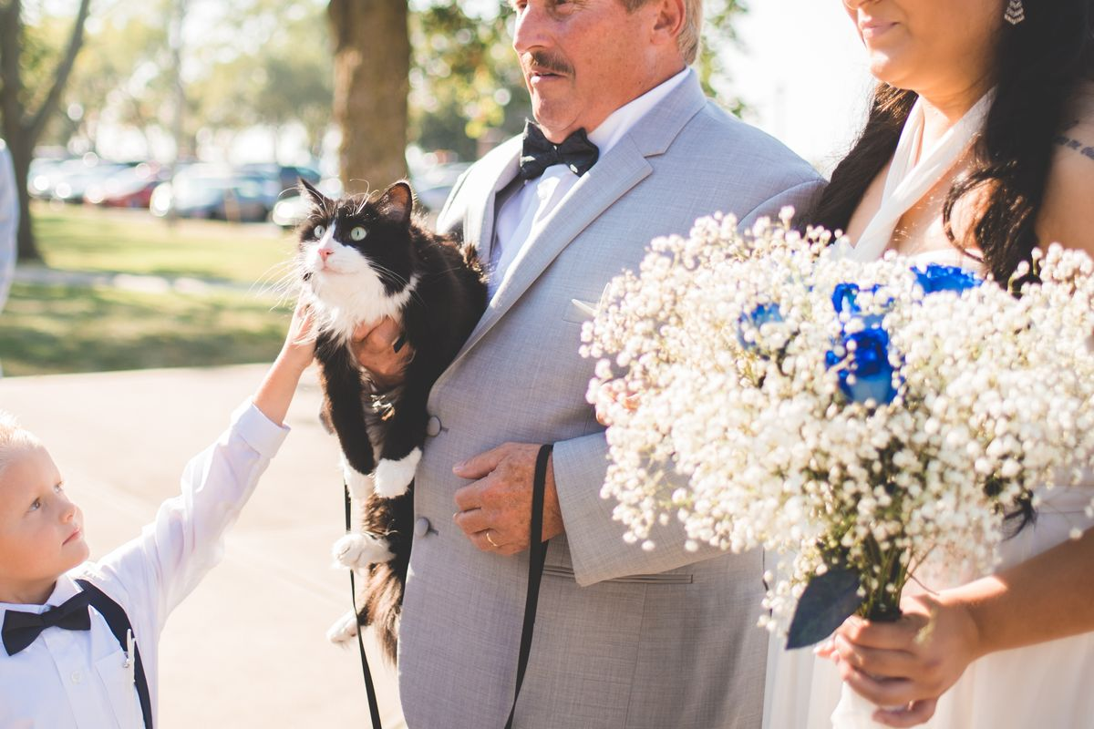 Cat Who Never Leaves His Mom, Walks Her Down the Aisle In These Beautiful Photos