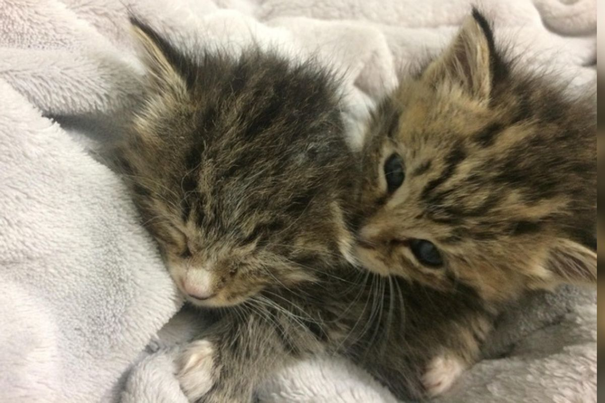 Kitten Brothers Found Huddled Up in Shed - Their Cuddles Keep Them Alive