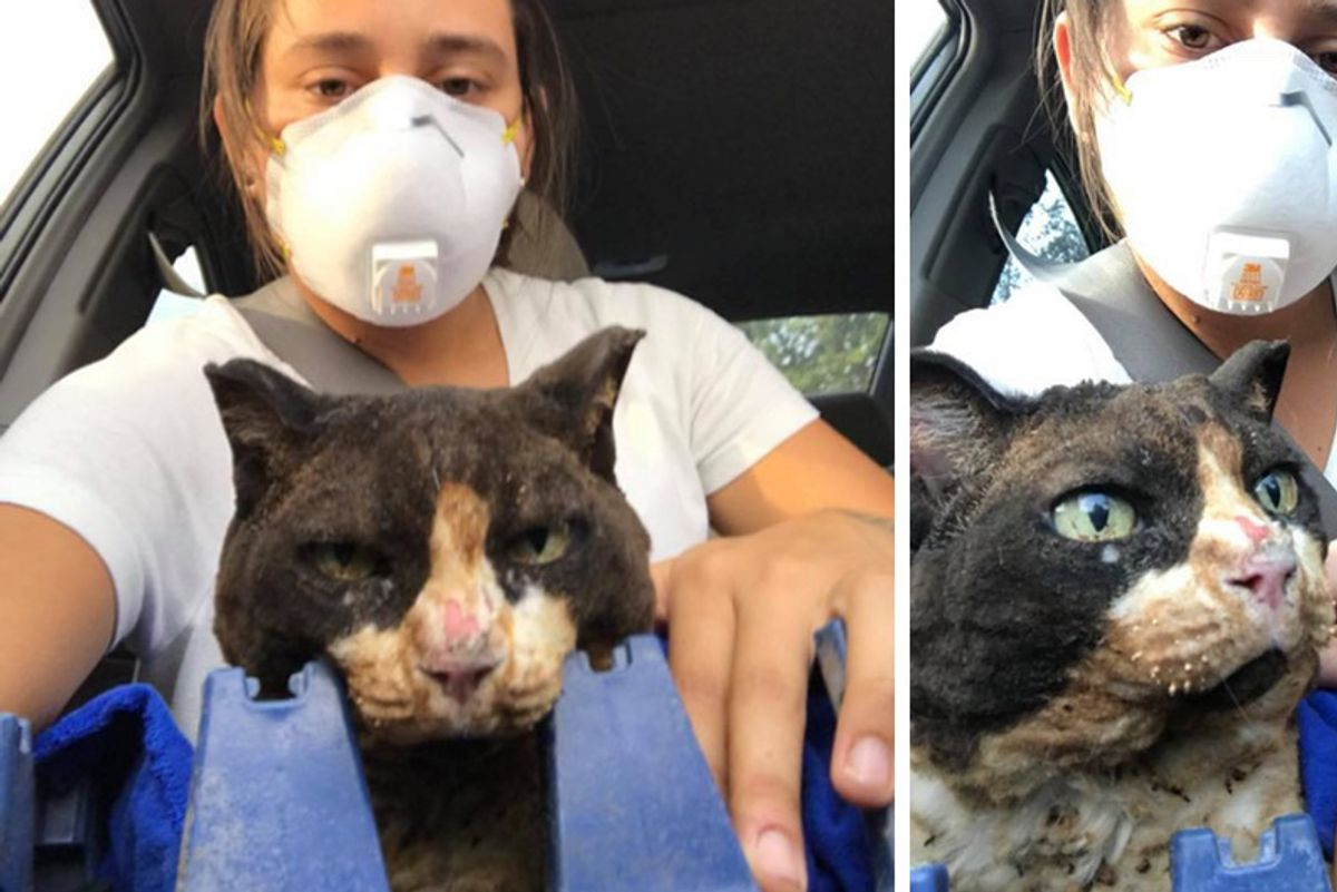 Women Go Back to Save Cats After the Fires and Help Them Every Way They Can