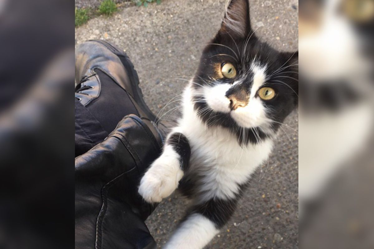 Kitty Who Lives By a Bus Stop, Insists on Greeting Everyone Waiting for Buses...