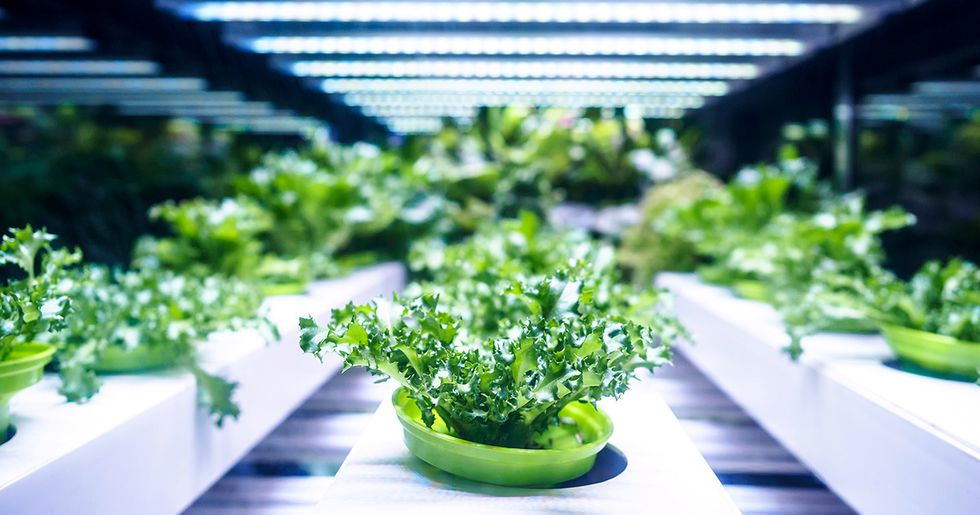 Will the Appetite for Hydroponics Profits Uproot the Future of Organics?