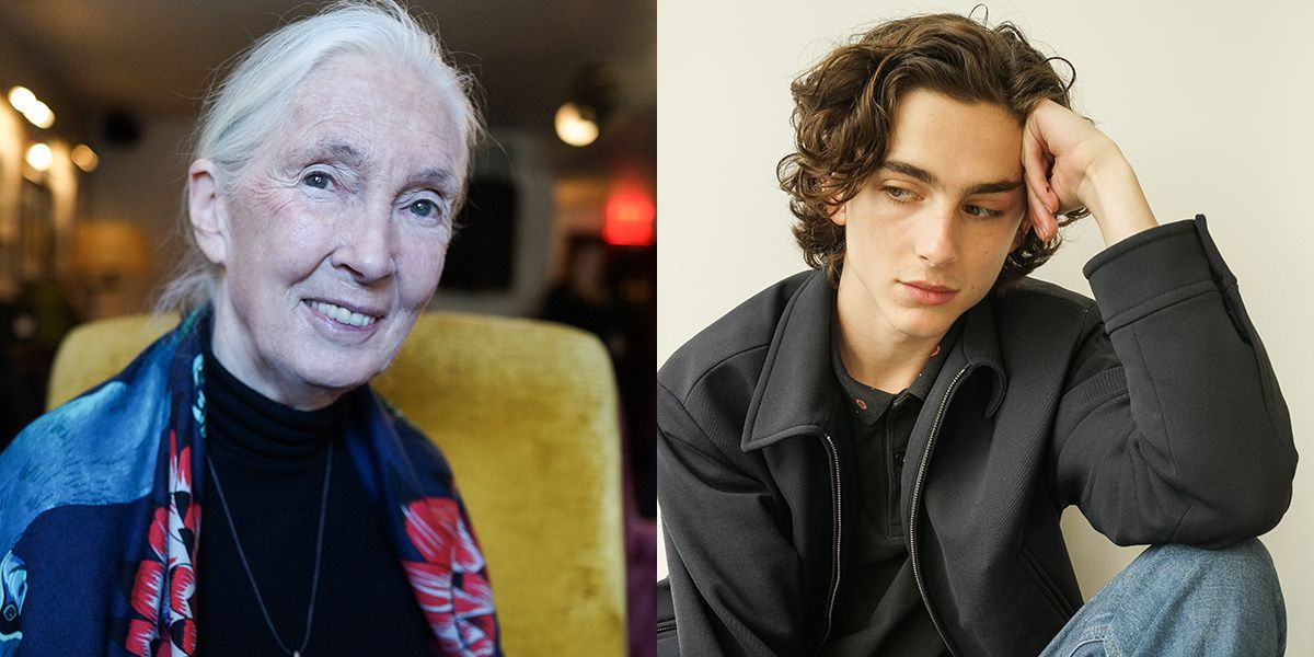 See Timothée Chalamet, Jane Goodall and More at the 2017 New York Film Festival