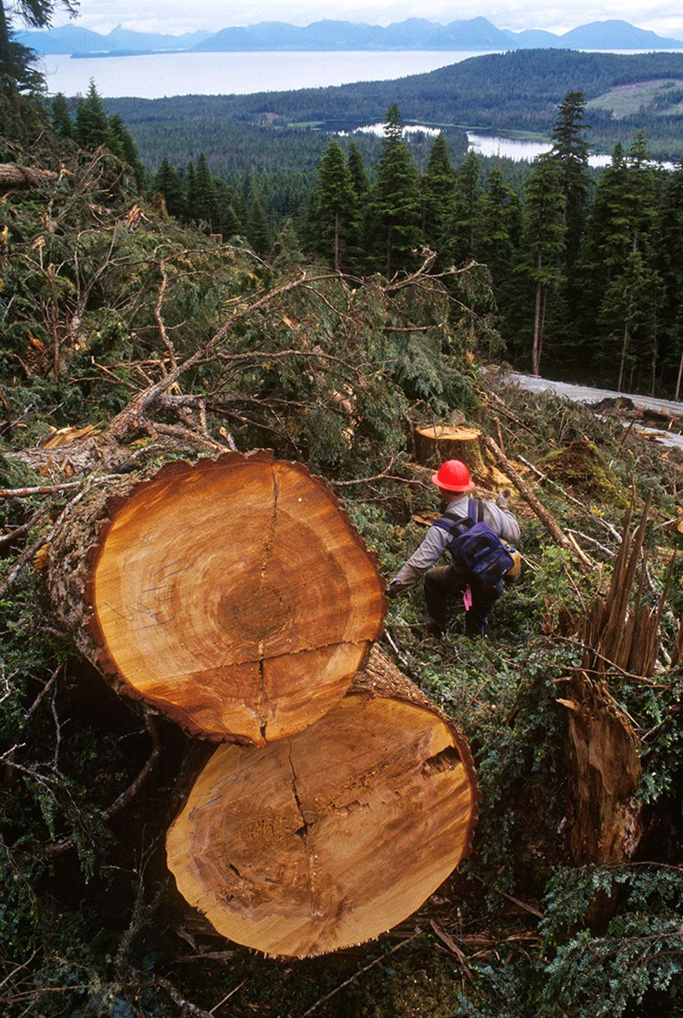 National Forests, Endangered Species Under Attack as House Republicans Pass Reckless Logging Bill