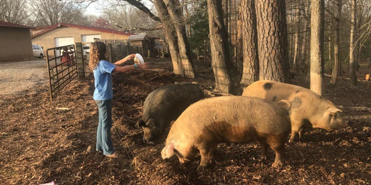 """Bringing the """"farm"""" back to hog farming"""