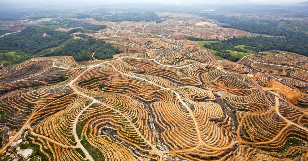 Better Land Use Can Achieve 30% of Carbon Cuts by 2030