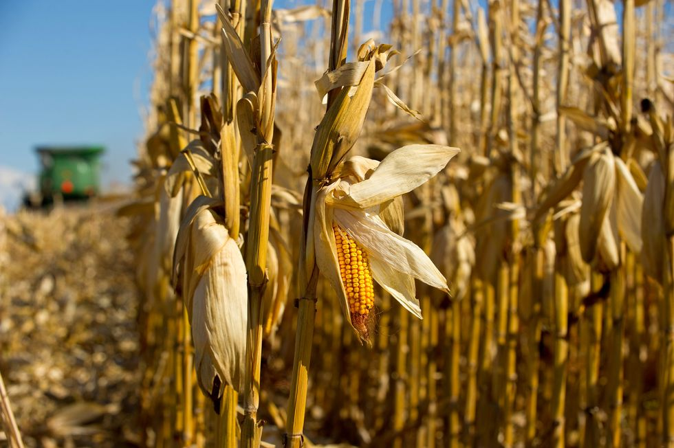 Report: Global Food Chain Increasingly Threatened by Corporate Consolidation
