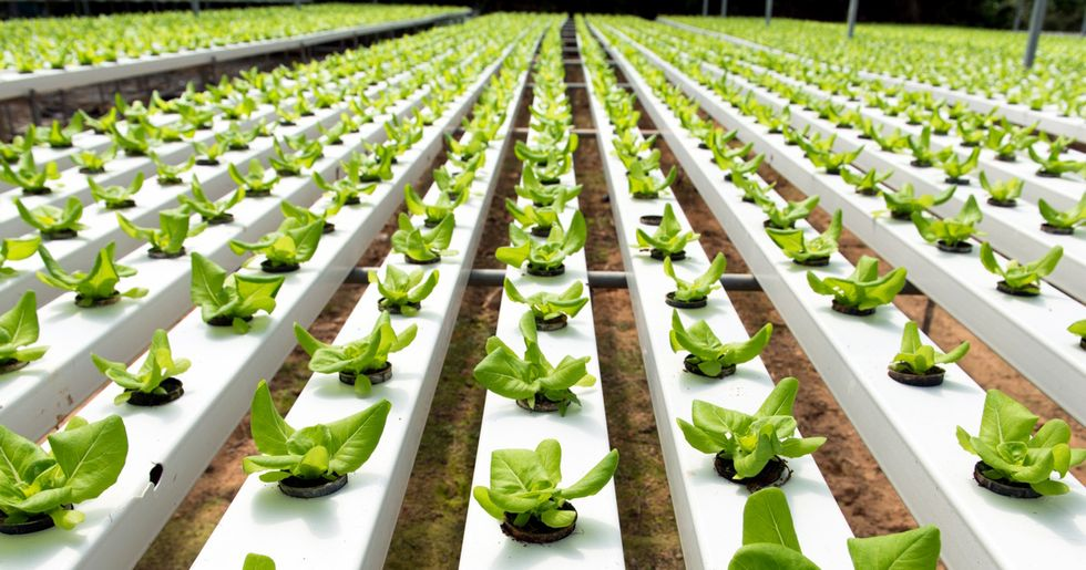 National Organic Standards Board Decrees That Hydroponic Can Be Organic